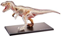 4D Anatomy Model T-Rex 38 cm