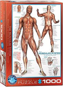 The Muscular System, puzzle 1000 palaa