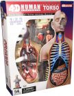 4D Human Anatomy Torso Deluxe